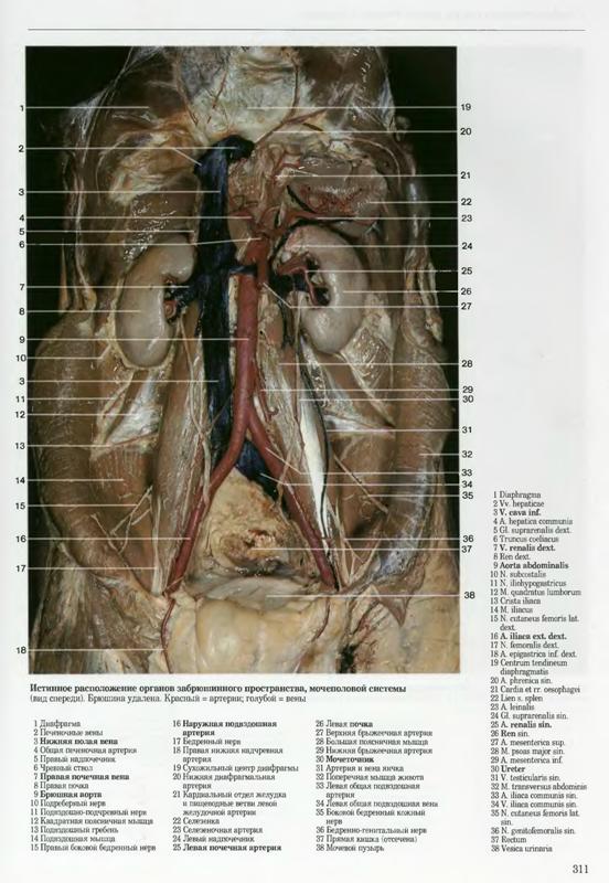 Расположение женских половых органов фото 23 фотография